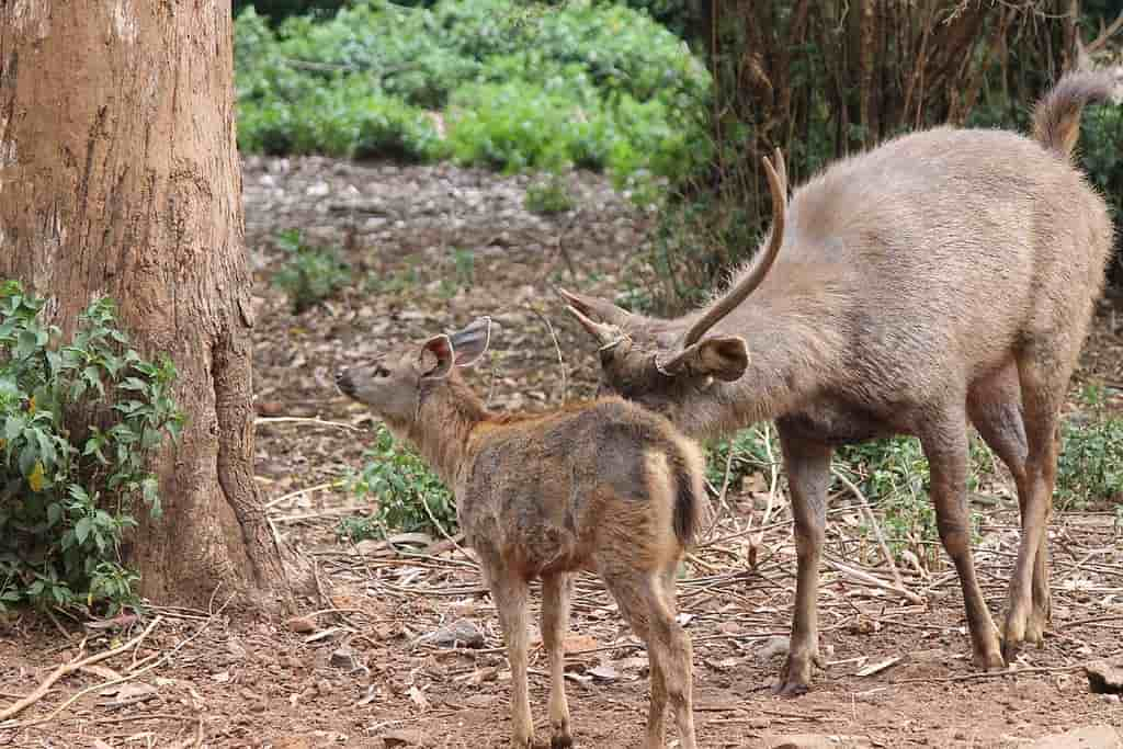Tourist Places in Ooty in Hindi, Deer Park